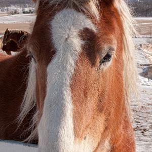 Horse Memorials