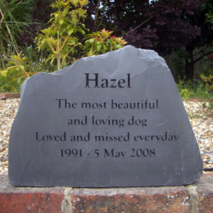 Hazel the Dog, missed everyday
